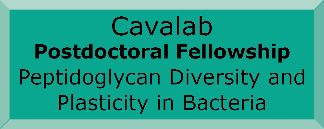 Cavalab Postdoc fellowship